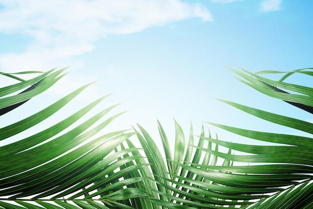 Зеленые пальмовые листья на фоне голубого неба Premium Фотографии