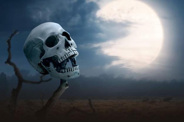 枯れ木の上の人間の頭蓋骨 Premium写真