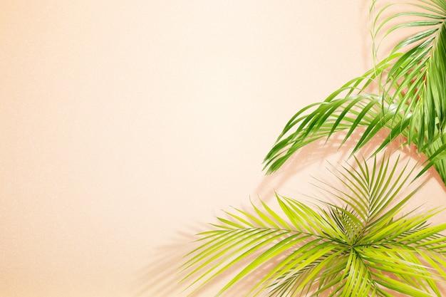 緑のヤシの葉 Premium写真