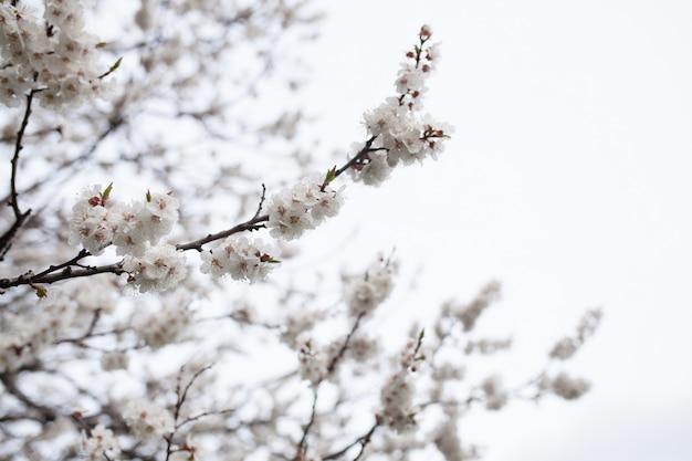 自然の上の花の木 Premium写真