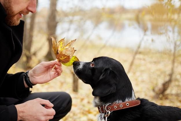 男は犬スパニエル秋の公園で秋に歩く Premium写真