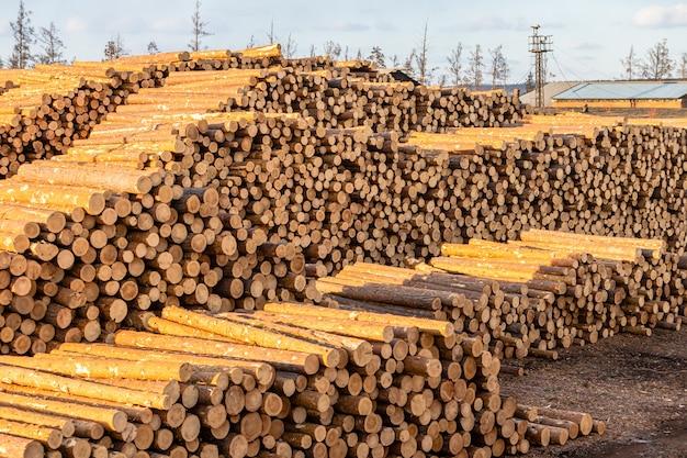 松の山とカラマツの丸太が輸出用に準備されています。世界森林保護区の伐採と破壊の概念。 Premium写真