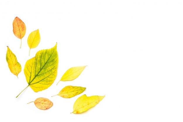 秋の組成物。白で隔離される秋のカエデの葉で作られたフレーム Premium写真