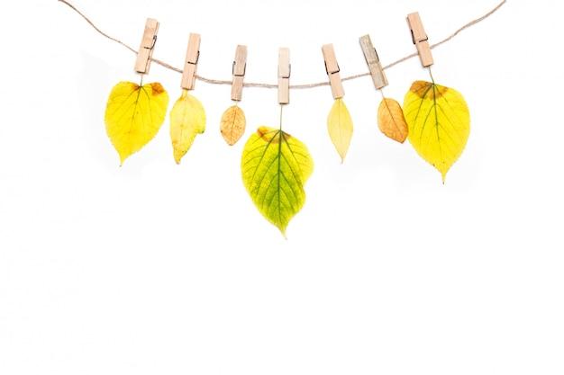 秋の組成物。秋の花と白で隔離されるロープの葉 Premium写真