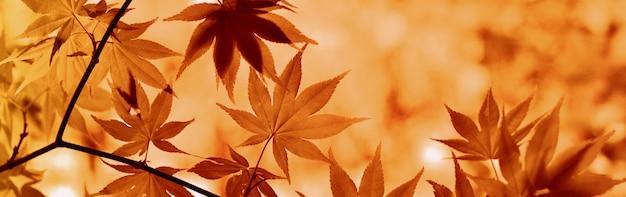 秋の風景 Premium写真