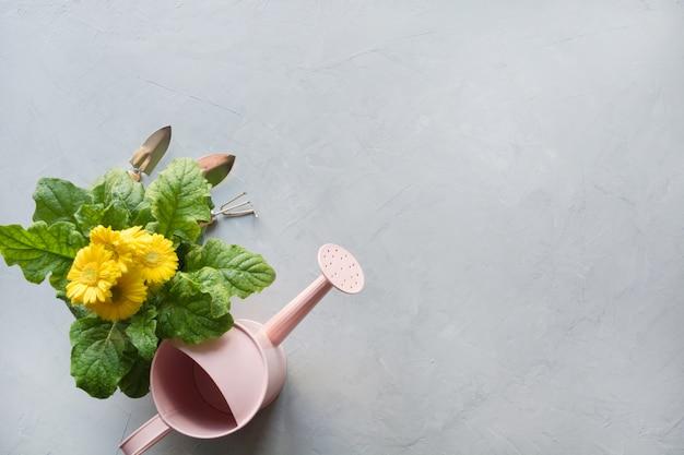 黄色のガーベラ、通行料、庭の花はグレーに植えます。 Premium写真