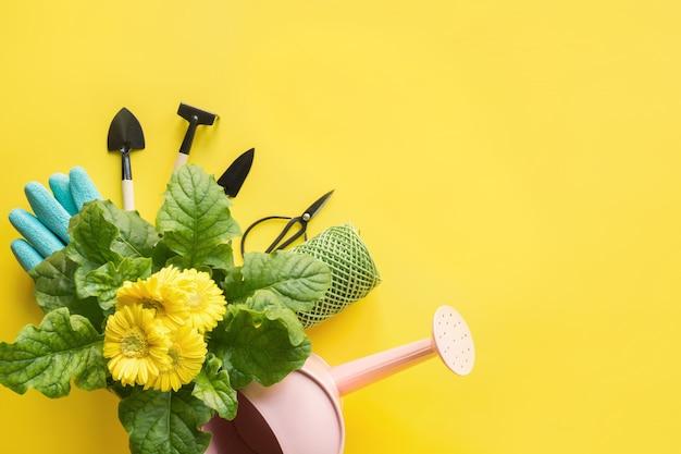 黄色のガーベラ、通行料、庭の花とガーデニング。 Premium写真