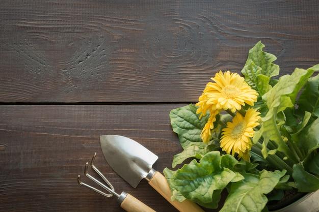 黄色のガーベラと通行料の園芸の背景。 Premium写真