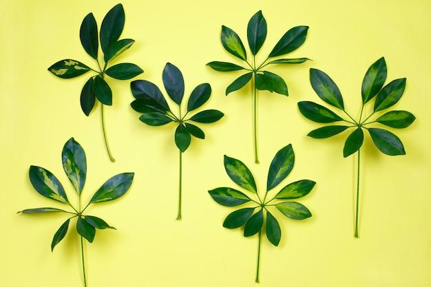 パステルイエローの背景に熱帯の葉 Premium写真