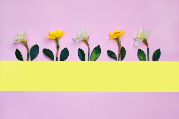 ピンクの背景に水仙の花で作られた春の組成 Premium写真