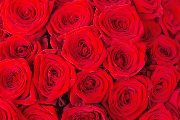 Природные красные розы фон крупным планом текстуры Premium Фотографии