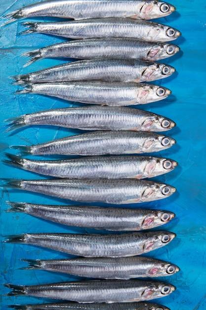 アンチョビのグループが広がりました。イオニア海、イタリア、プーリア地方 Premium写真