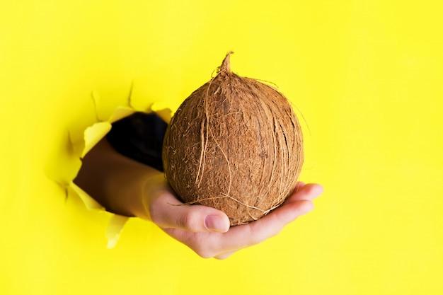 引き裂かれた黄色い紙の壁の穴から大きな全体のココナッツを持っている手。特別提供およびバイオオーガニック食品 Premium写真