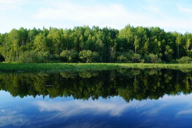 夏の自然。緑の木々が水に反映されます。 Premium写真