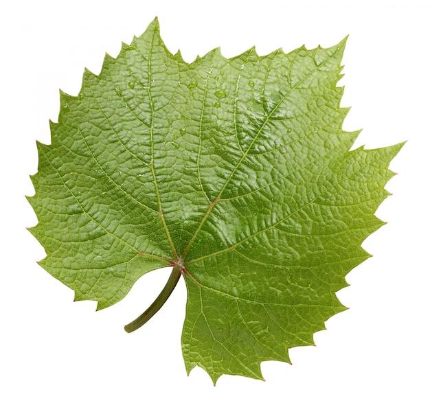 白い背景で隔離のブドウの葉。 Premium写真
