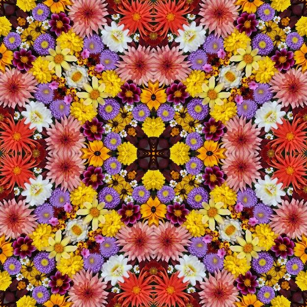 美しい秋の花の背景。万華鏡の効果。 Premium写真