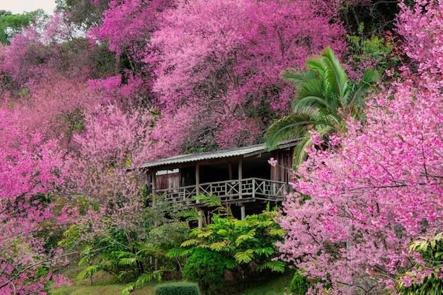 太陽光線、桜の花が咲くと晴れた日に春のピンクの桜の木 Premium写真