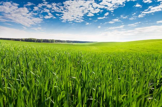 緑の野原と美しい夕日 Premium写真