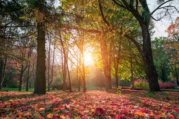 美しい秋の公園。秋の森。 Premium写真