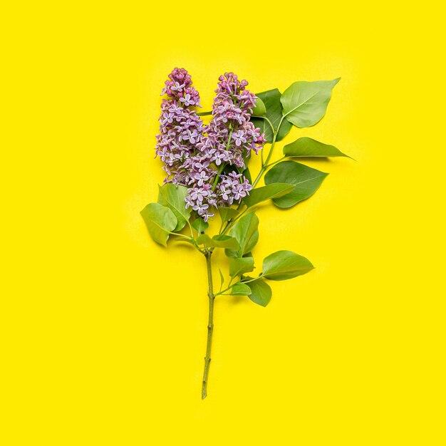 黄色のライラックの花 Premium写真