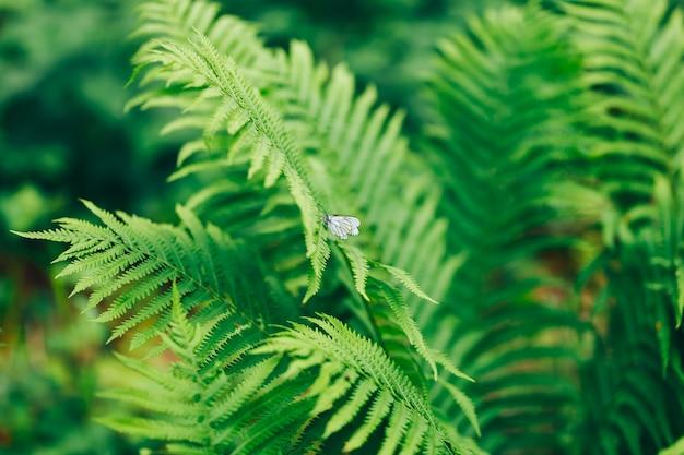 美しいシダは日光の下で緑の葉の天然花シダを残します Premium写真