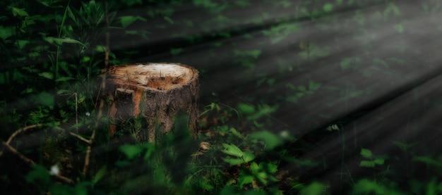 緑の森、春の日差しの中で絵のような切り株の写真。霧の中で朝の美しい自然。神秘的な灯りの魔法の妖精の森。森林伐採 Premium写真