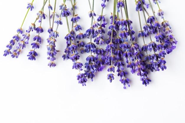 Цветы лаванды, изолированные на белом Premium Фотографии