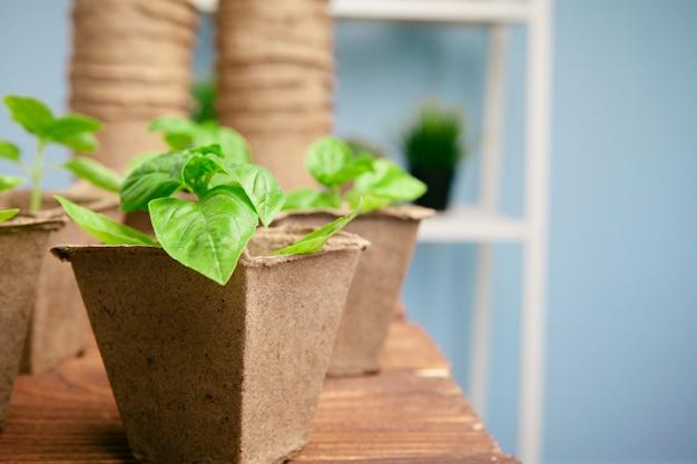 春の温室で苗を植えることをクローズアップ Premium写真
