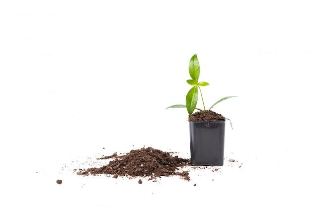 Молодое растение изолированное на белизне Premium Фотографии