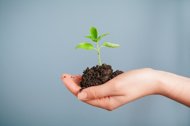 彼女の手のひらの上で緑の植物を保持している女性のクローズアップショット。閉じる Premium写真