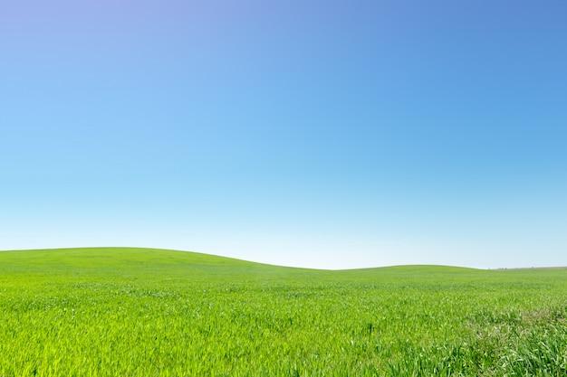 美しい緑の野原 Premium写真