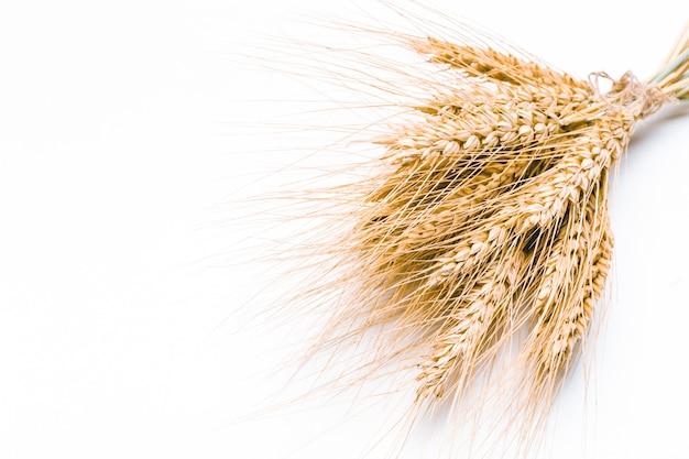 白で隔離される小麦の穂 Premium写真