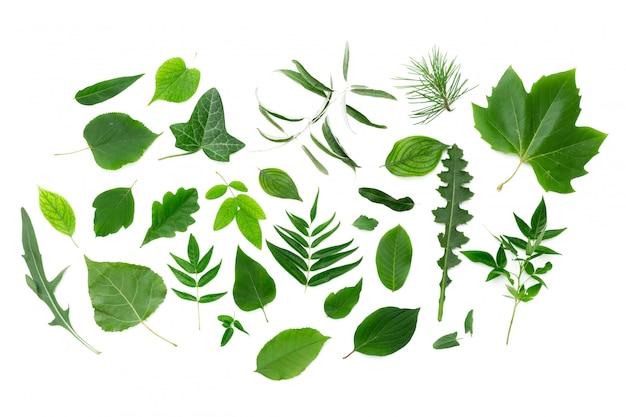 白地に緑の葉 Premium写真
