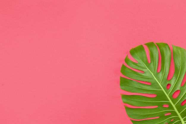 モンステラの葉とファッションの背景 Premium写真