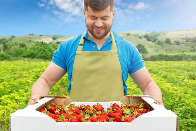 新鮮なイチゴの箱とイチゴ畑に立っている中年のひげを生やした男 Premium写真