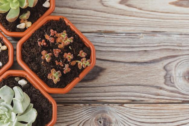 茶色のプラスチックポットのミニ緑多肉植物 Premium写真