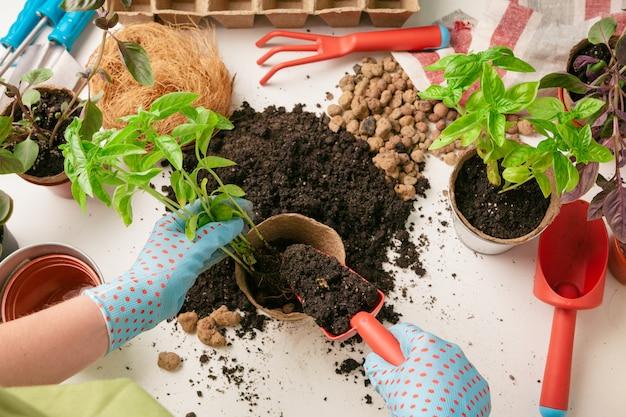 Женщина садовник расставляет растения в доме с помощью инструментов Premium Фотографии