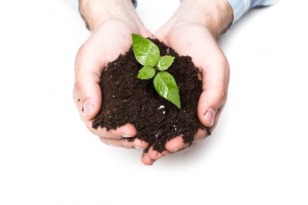Мужские руки, держа почву и растения, крупным планом Premium Фотографии