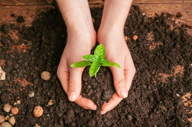彼女の手のひらの上で緑の植物を保持している女性のクローズアップショット Premium写真