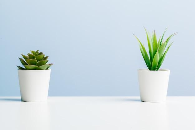 青色の背景に美しい多肉植物。 Premium写真