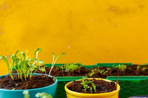 庭で働いて、植木鉢をクローズアップ Premium写真