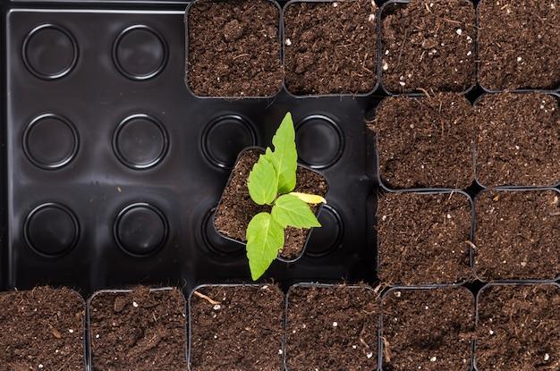 茶色の土壌で発芽する植物 Premium写真