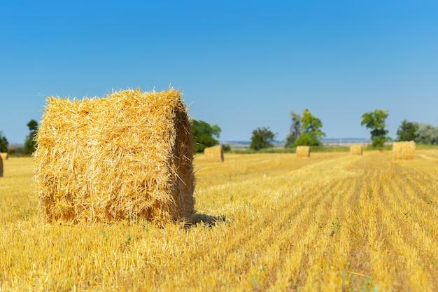 田舎で黄金の干し草の俵 Premium写真