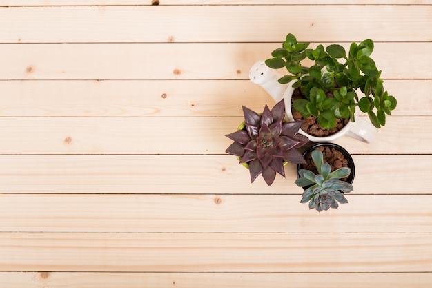 Суккуленты, комнатные растения в горшках Premium Фотографии