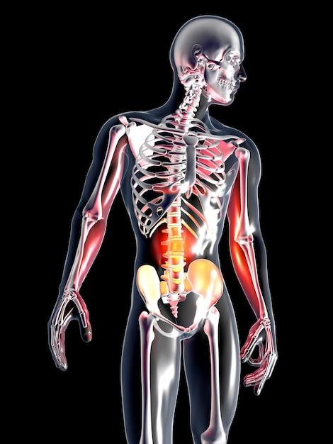 解剖学-胃 Premium写真