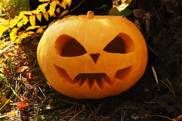 Хэллоуин тыква с резной страшной мордой на земле в лесу. Premium Фотографии