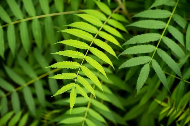素敵で質感のある緑ときれいな植物の葉 Premium写真