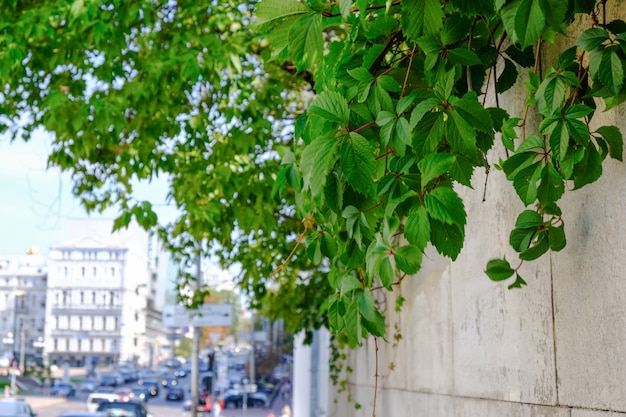 キエフの中心部にある夏の街並み Premium写真