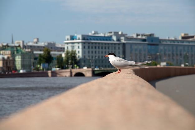 夏の晴れた日に市の堤防の欄干にカモメ Premium写真