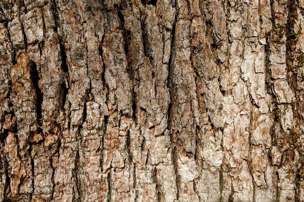 サザンシルキーオークの樹皮 Premium写真